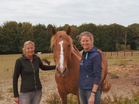 Hippothérapie: les chevaux pour aider le patient à se libérer